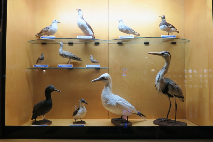 La Coruna - April 2017 - aquarium stuffed birds