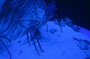 Azura of the Seas La Coruna Aquarium
