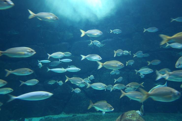 La Coruna - April 2017 - aquarium fish