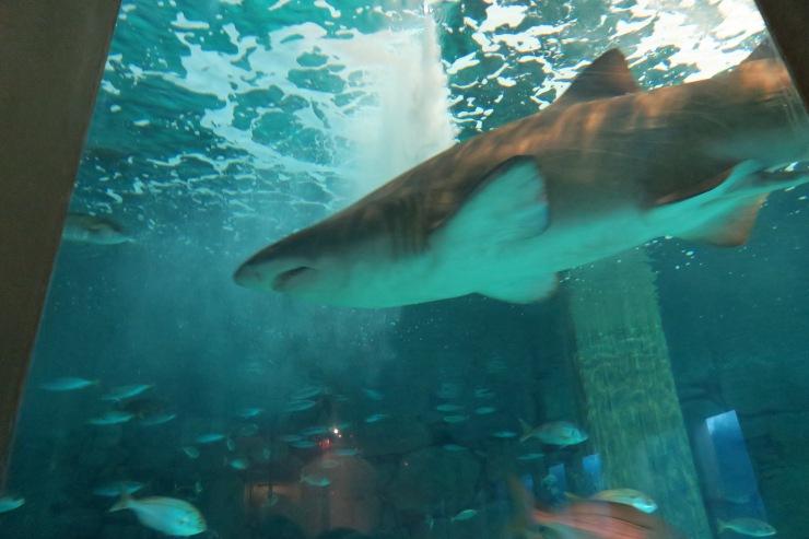 La Coruna - April 2017 - aquarium shark
