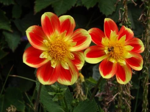 Britannia 6 July 2015 Guernsey garden