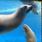 Oasis of the Seas Barcelona Zoo seallions
