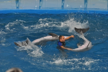Oasis of the Seas Barcelona Zoo dolphin show