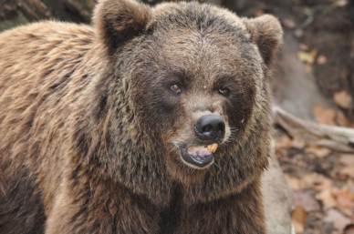 Oasis of the Seas Barcelona zoo bear