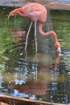Oasis of the Seas Barcelona zoo flamingo