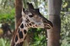 Oasis of the Seas Barcelona Zoo