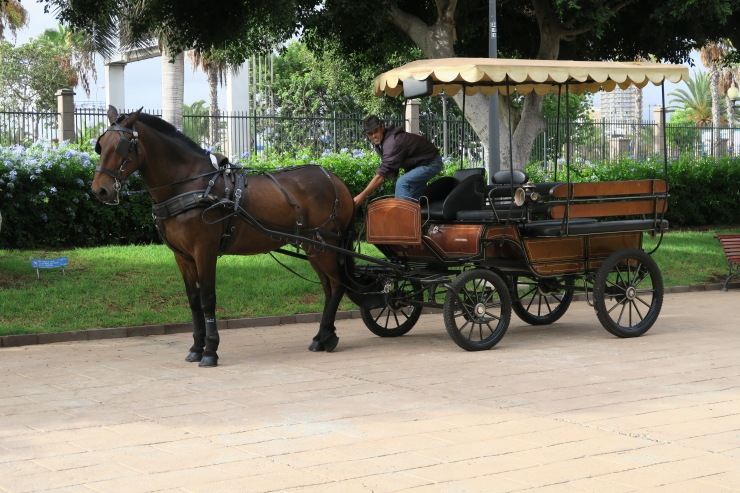 Las Palmas - September 2016 - horse and cart