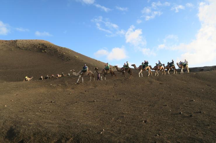 Lanzarote - September 2016 - camel trekking