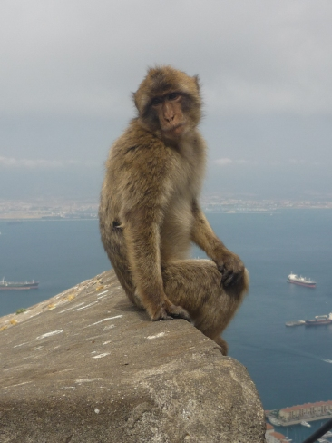 Independence of the Seas 30 June 2012 Gibralter ape
