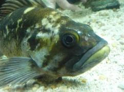 Independence of the Seas 30 June 2012 Lisbon aquarium fish